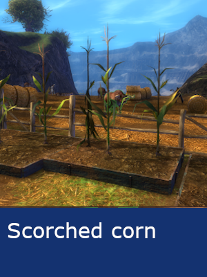 Scorched corn
